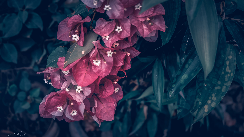 Foto d'estoc gratuïta de brots, flor, jardí, plantes