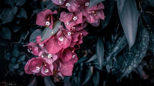 Immagine gratuita di boccioli, fiore, giardino, impianti