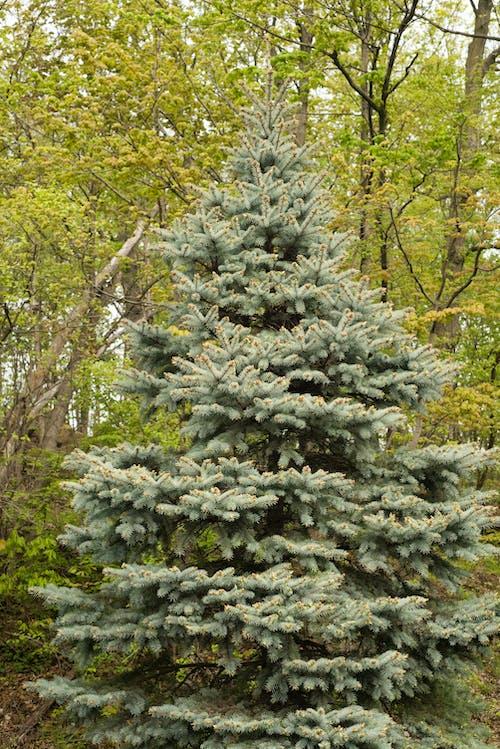 Бесплатное стоковое фото с выращивание, дневной свет, зеленый, лес