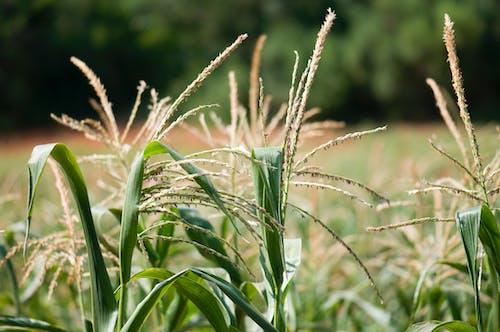 Бесплатное стоковое фото с выращивание, заводы, зеленый, нет людей