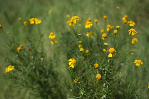 Бесплатное стоковое фото с желтый, заводы, зеленый, красивый