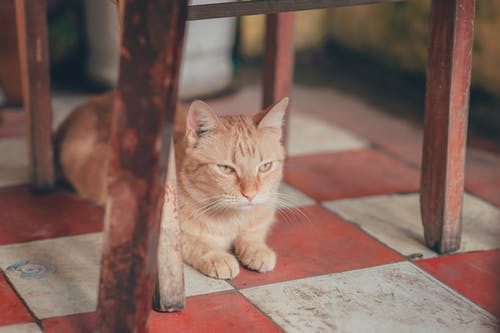 Photography of Orange Tabby Cat Lying on Floor