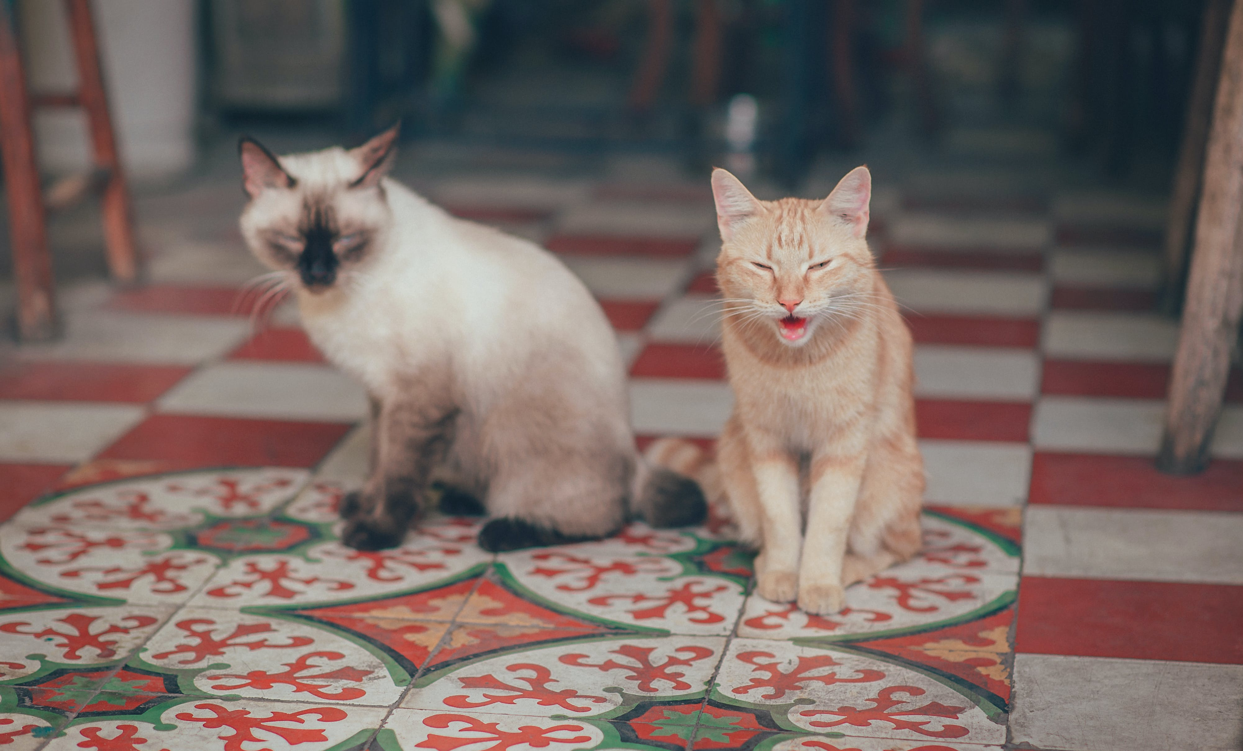 Close-Up Photography of Two Cats