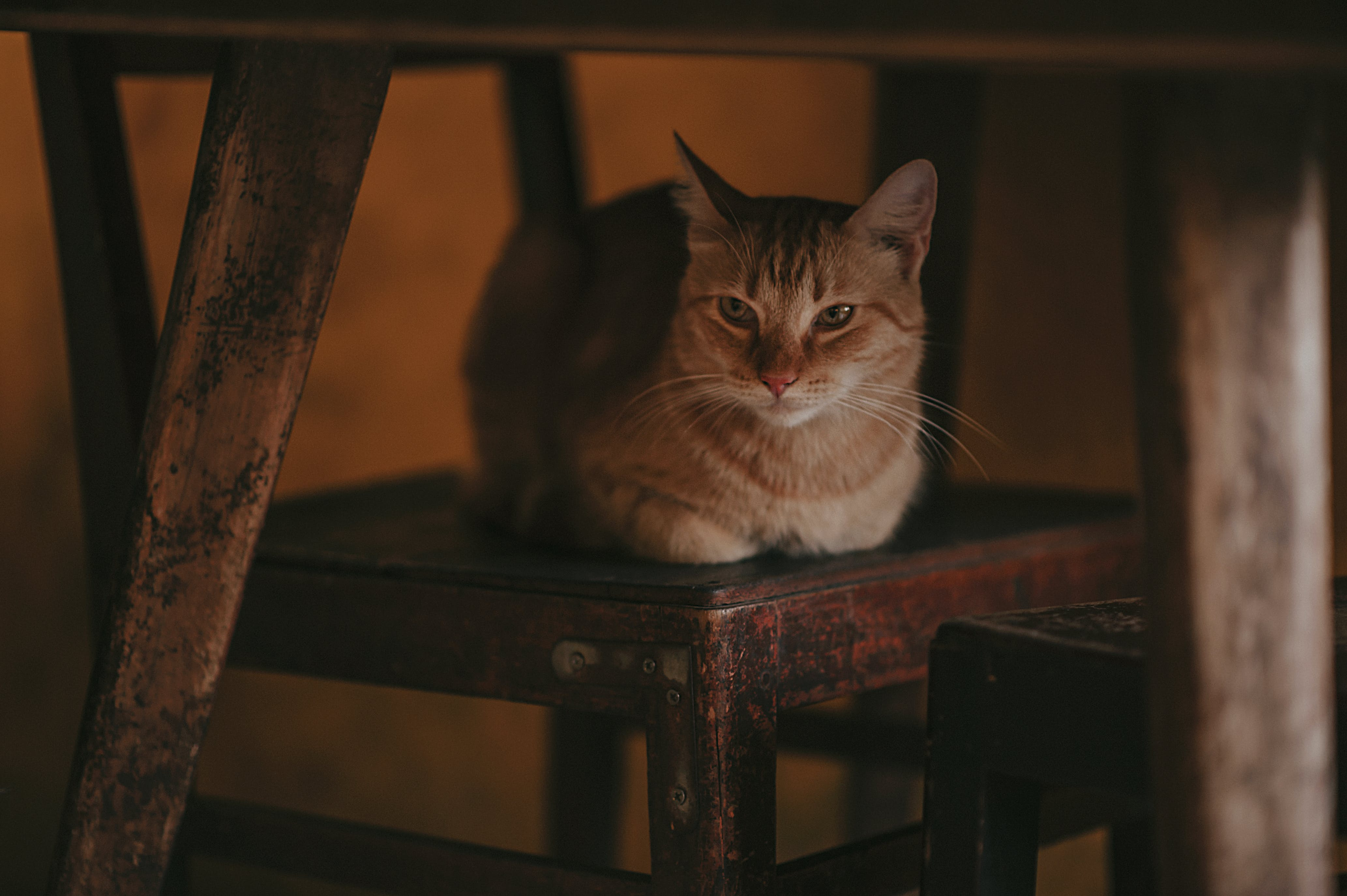 Photography of Orange Tabby Cat on Chair