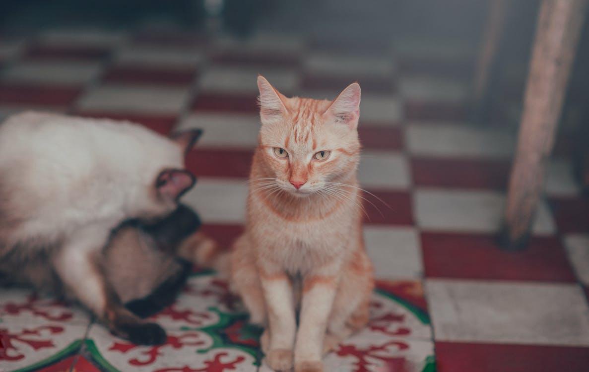 Close-Up Photography of Orange Tabby Cat
