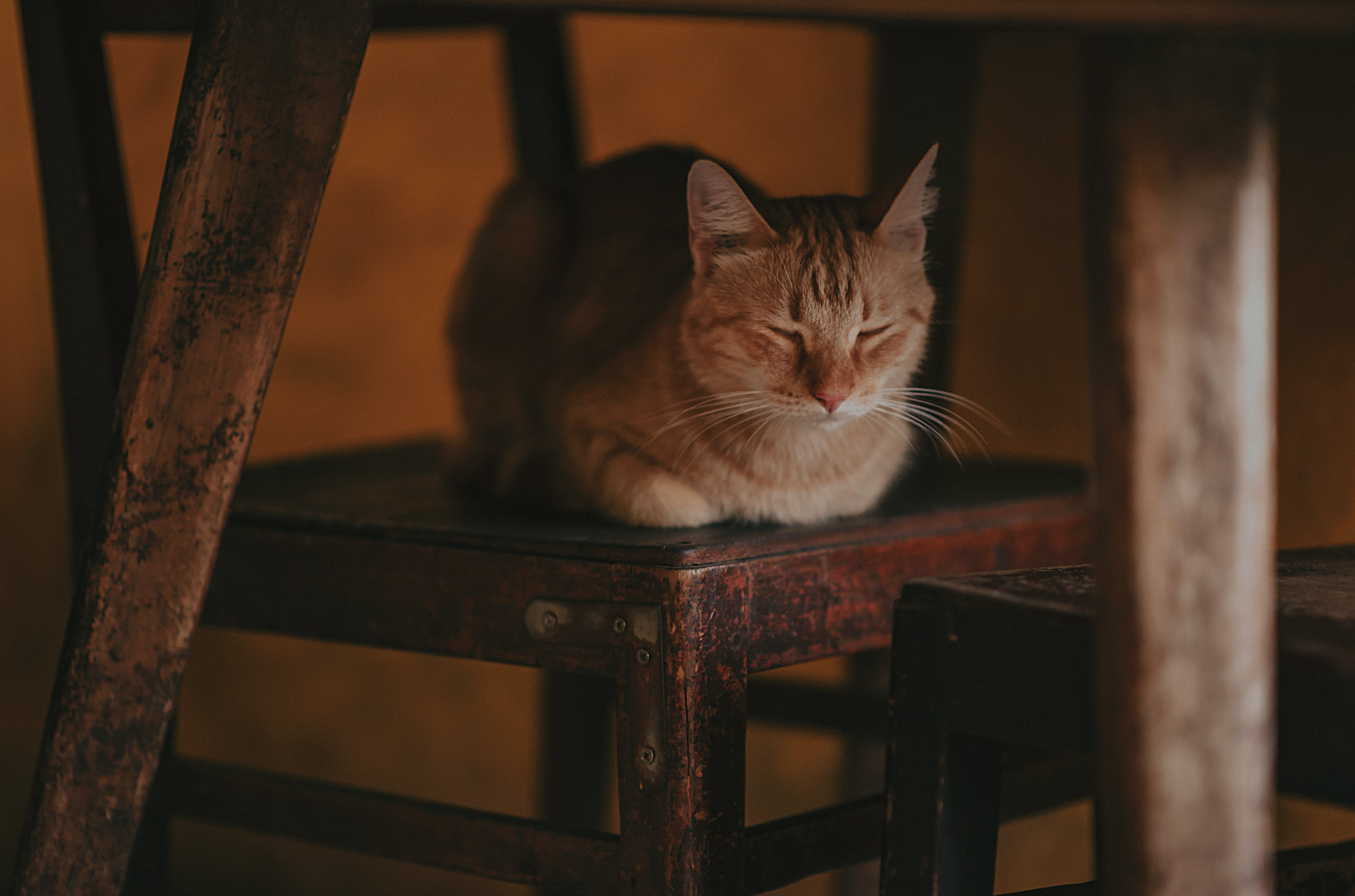 Photography of a Cat Lying on Wooden Chair