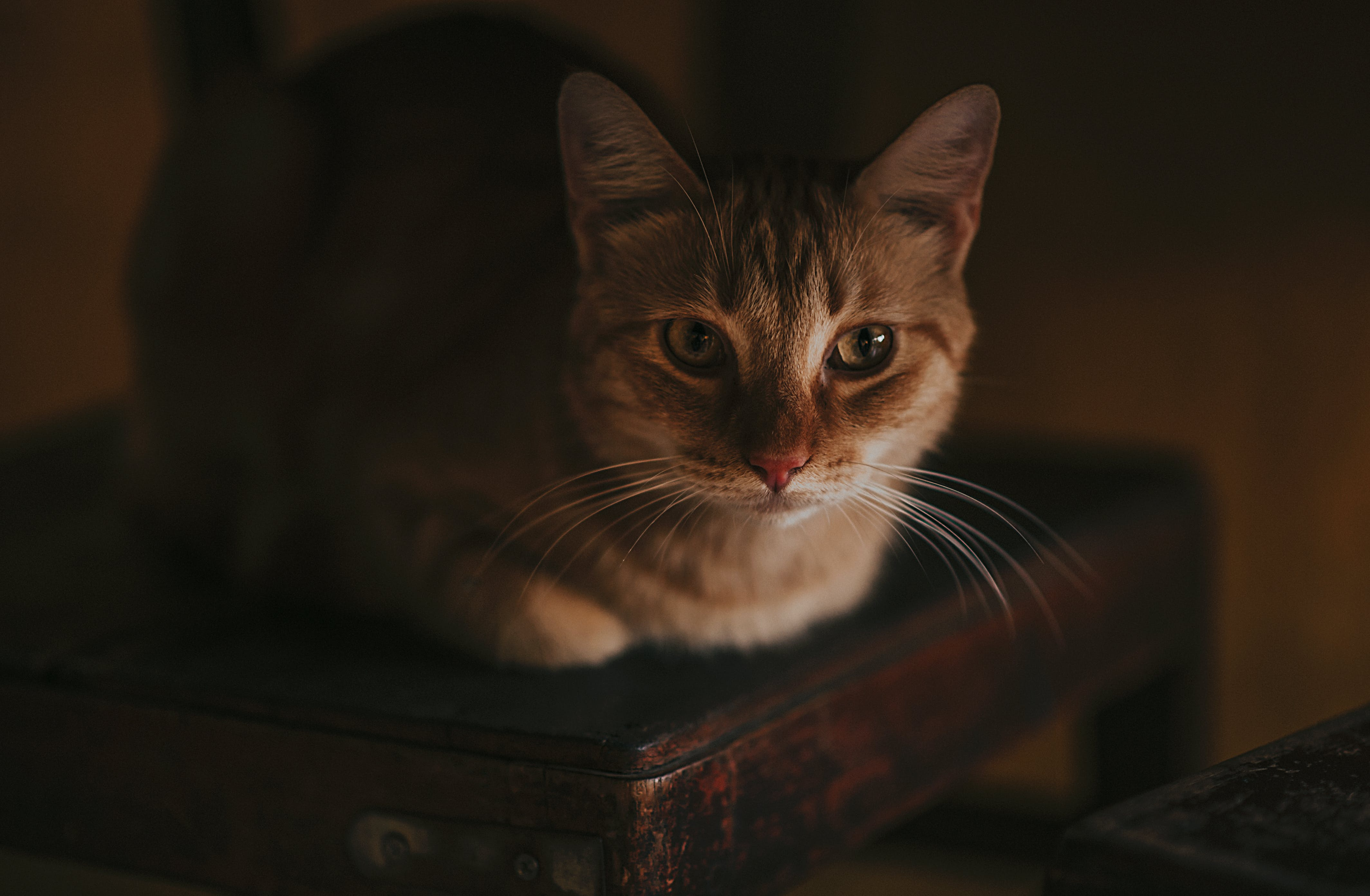 Close-Up Photography of a Cat Lying on Wooden Chair