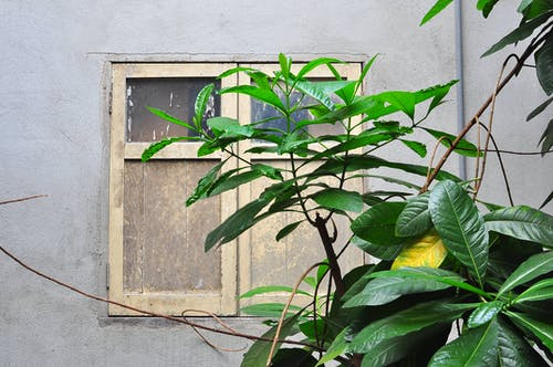 Green Leaf Plant Near White Closed Window
