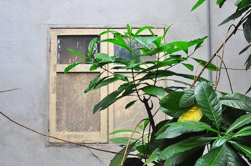 건물, 건축, 꽃, 나무의 무료 스톡 사진