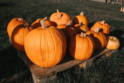 オレンジ, オレンジ色, かぼちゃの無料の写真素材
