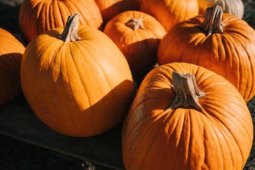 オレンジ, かぼちゃ, カボチャのつるの無料の写真素材