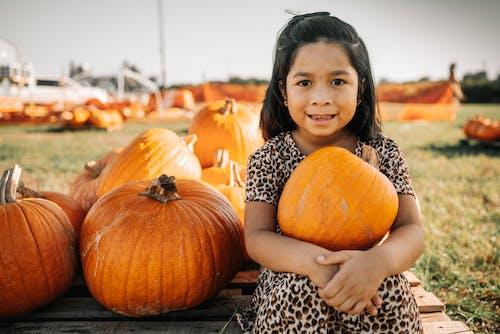 オレンジ, かぼちゃ, かぼちゃ畑の無料の写真素材