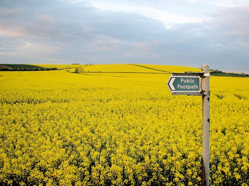 Fotos de stock gratuitas de campo, campos de cultivo, canola, cultivo