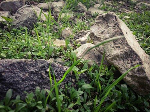 Gratis stockfoto met aarde, gras, groen, groen veld