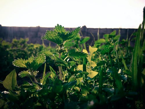Gratis stockfoto met fabrieken, gras, landschap, minimaal