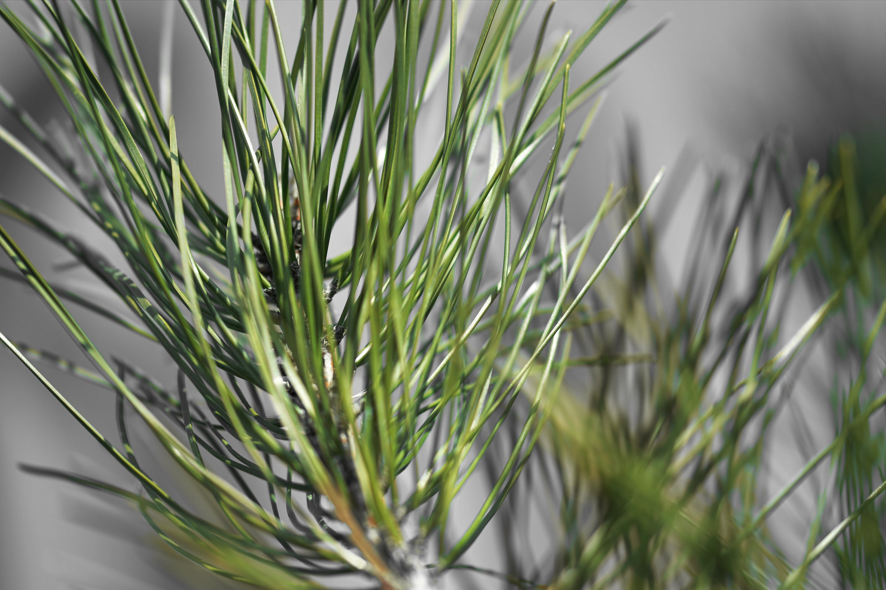 Selective Focus Photography of Linear Leaf Plant