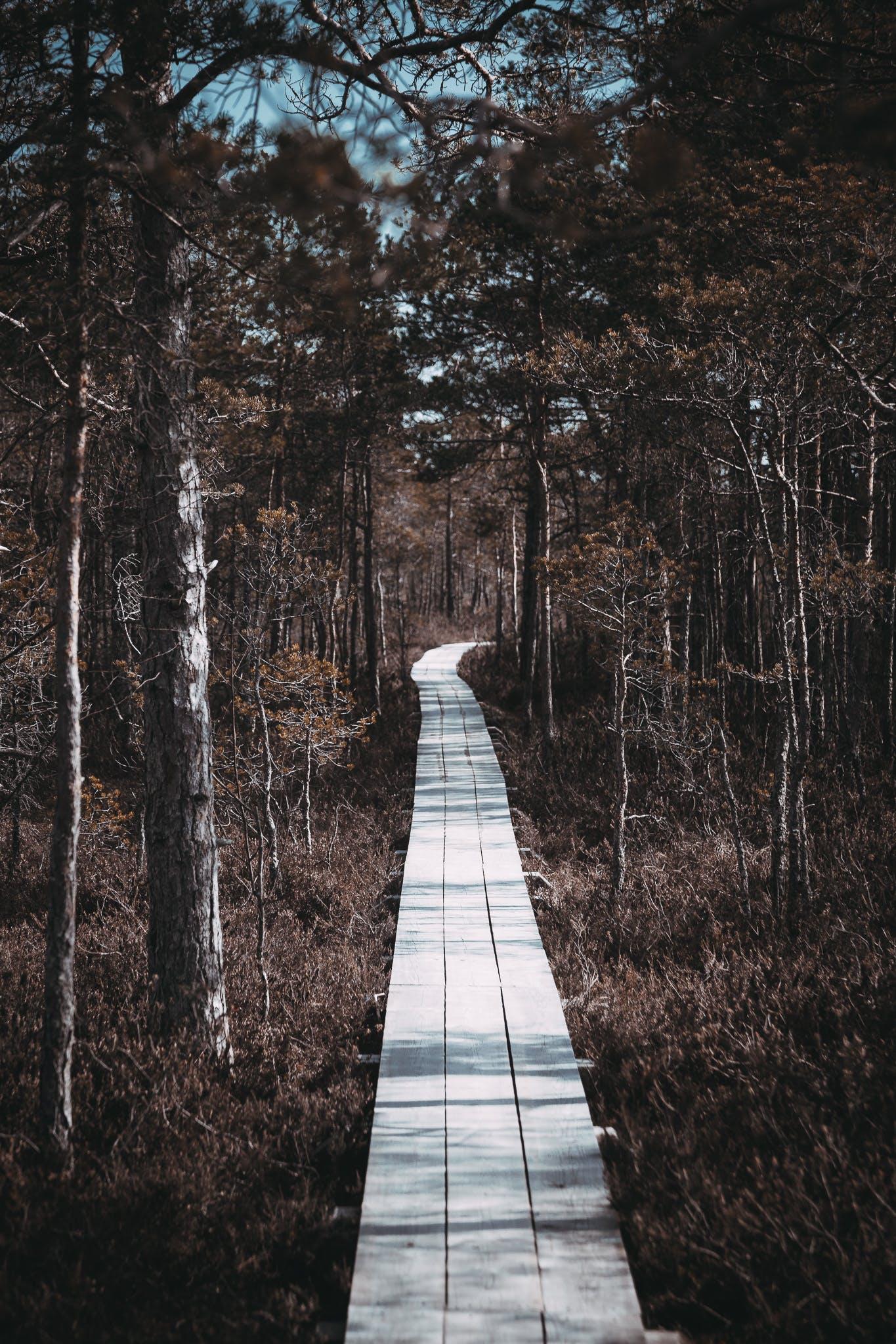 Foto d'estoc gratuïta de camí per la natura, de fusta, fotografia de natura, mistique