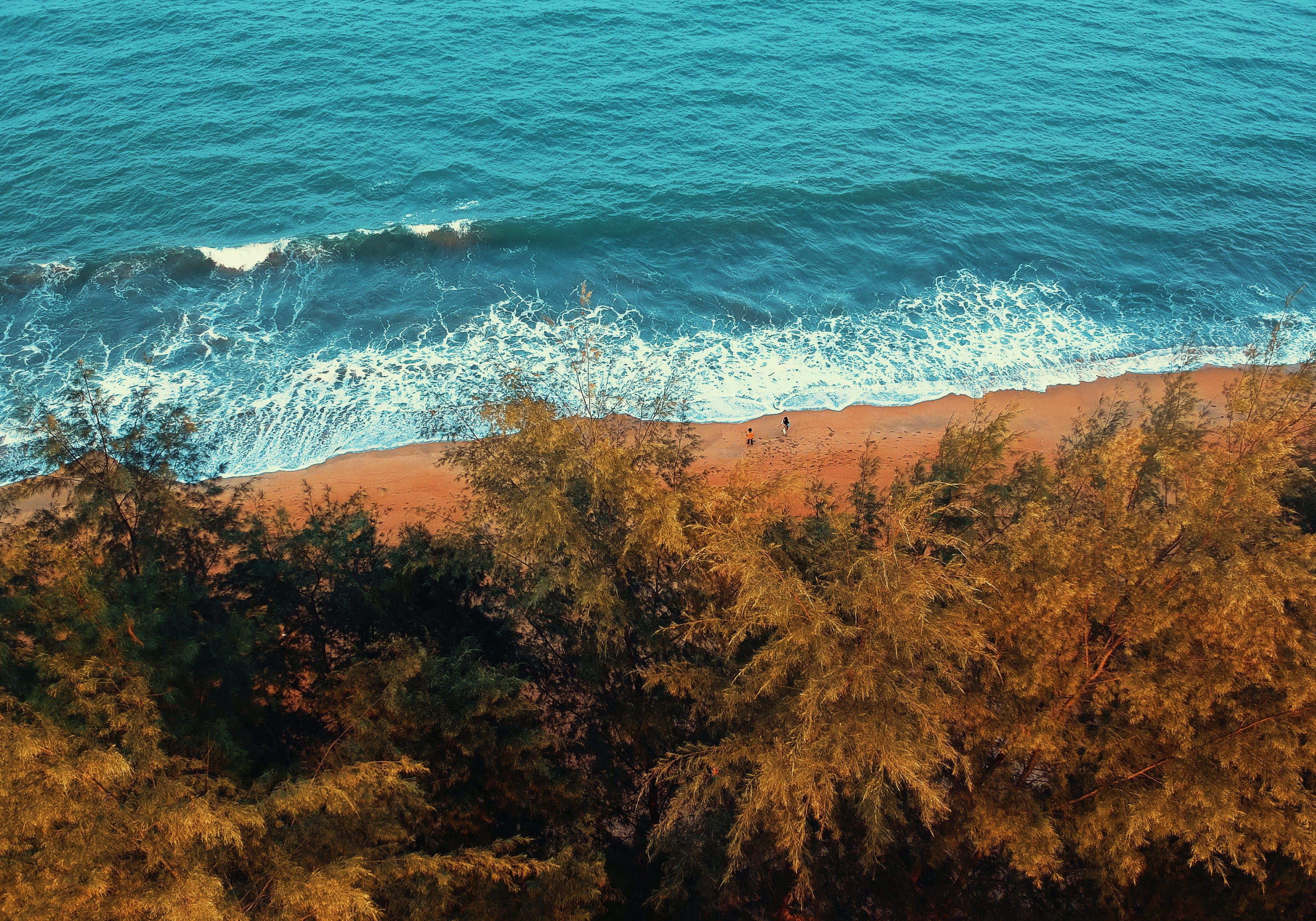 Gratis stockfoto met bij de oceaan, bird's eye view, bomen, golfjes