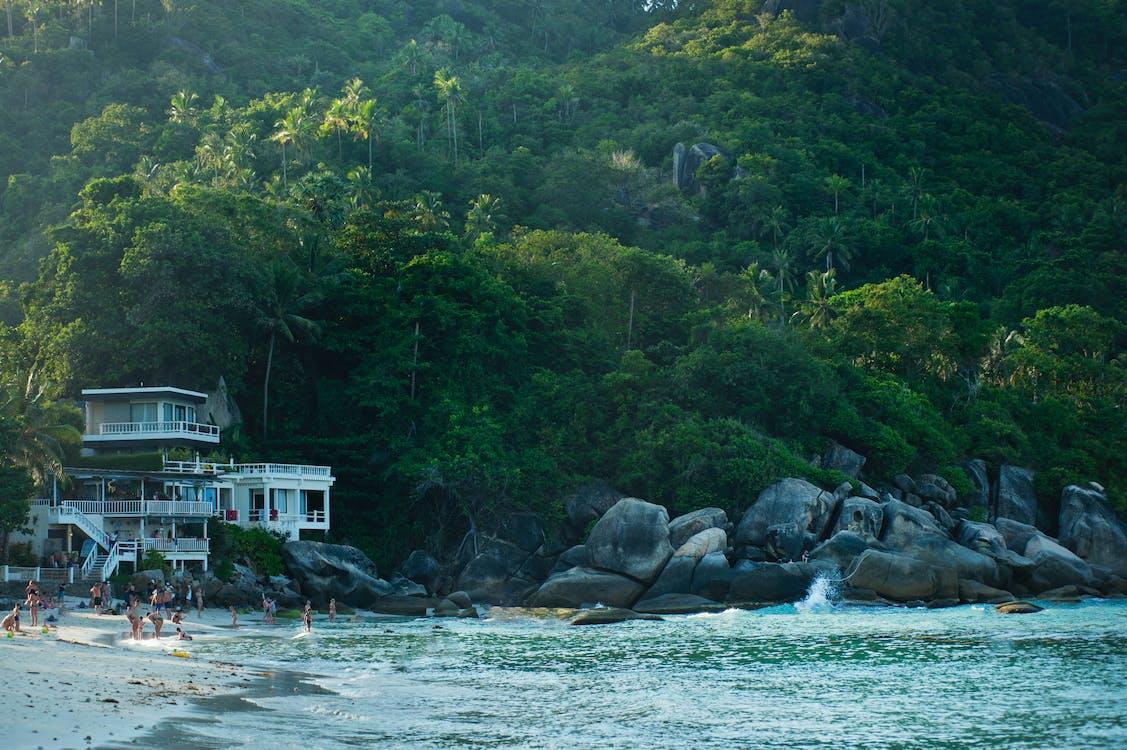 cestovný ruch, džungľa, hora