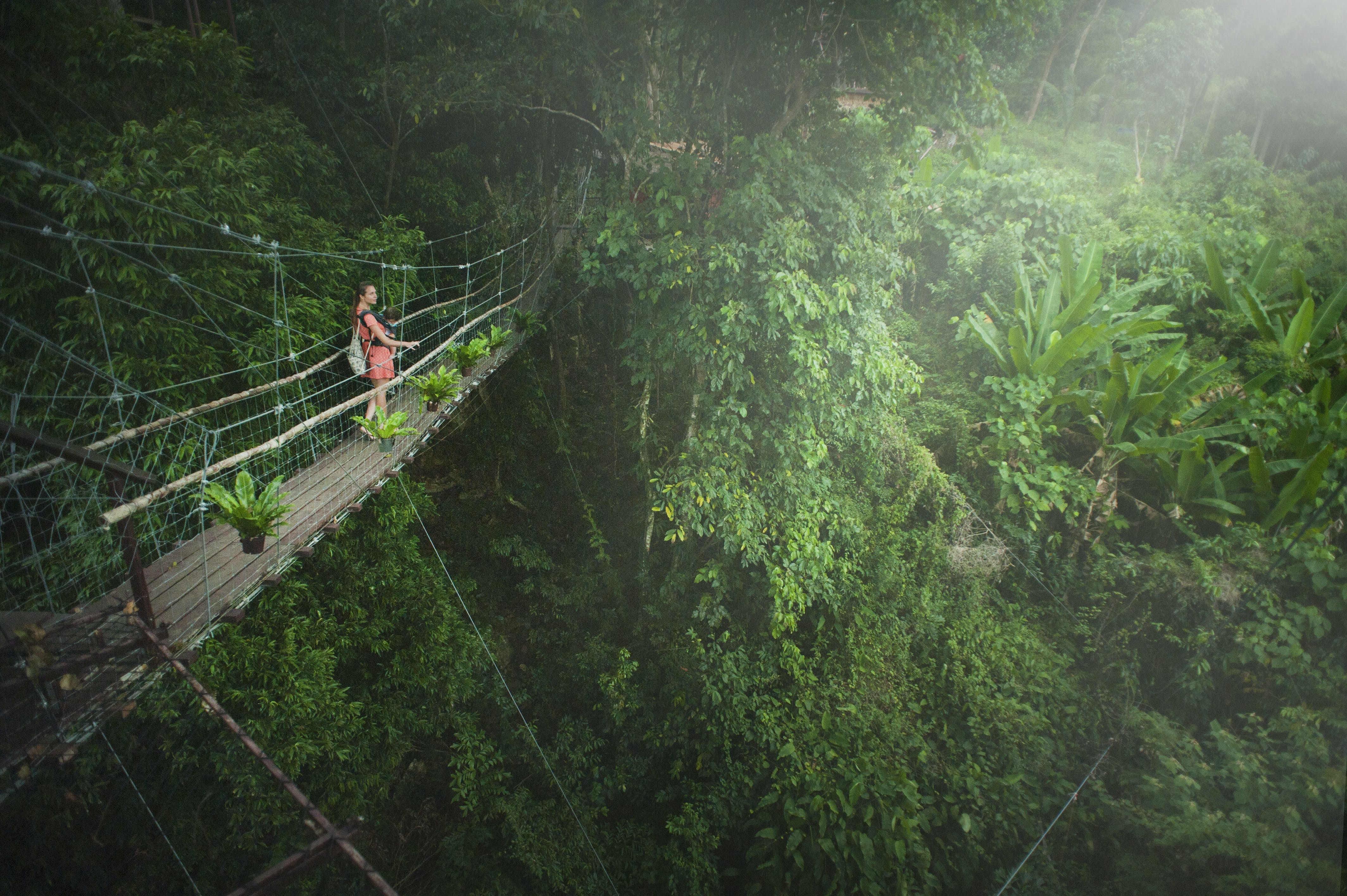 Girl Wearing Pink Dress Standing on Bridge Above Trees