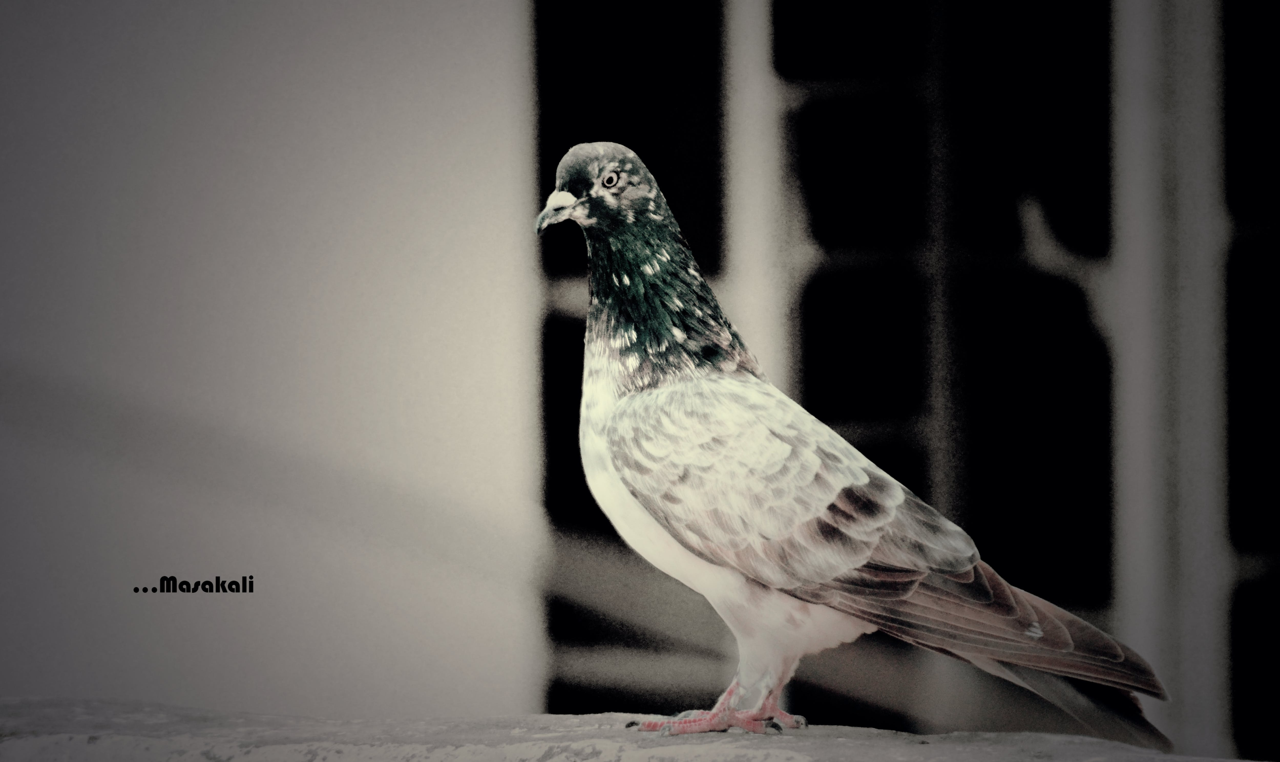 Free stock photo of Adobe Photoshop, animal photography, love, nikon