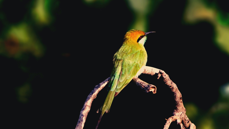 Free stock photo of avian, beautiful, beauty, bird