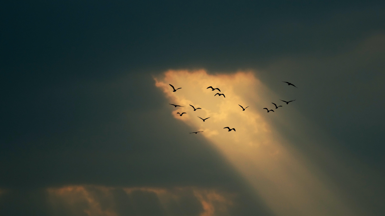 Free stock photo of Bird theme, birds, coordination, flock of birds