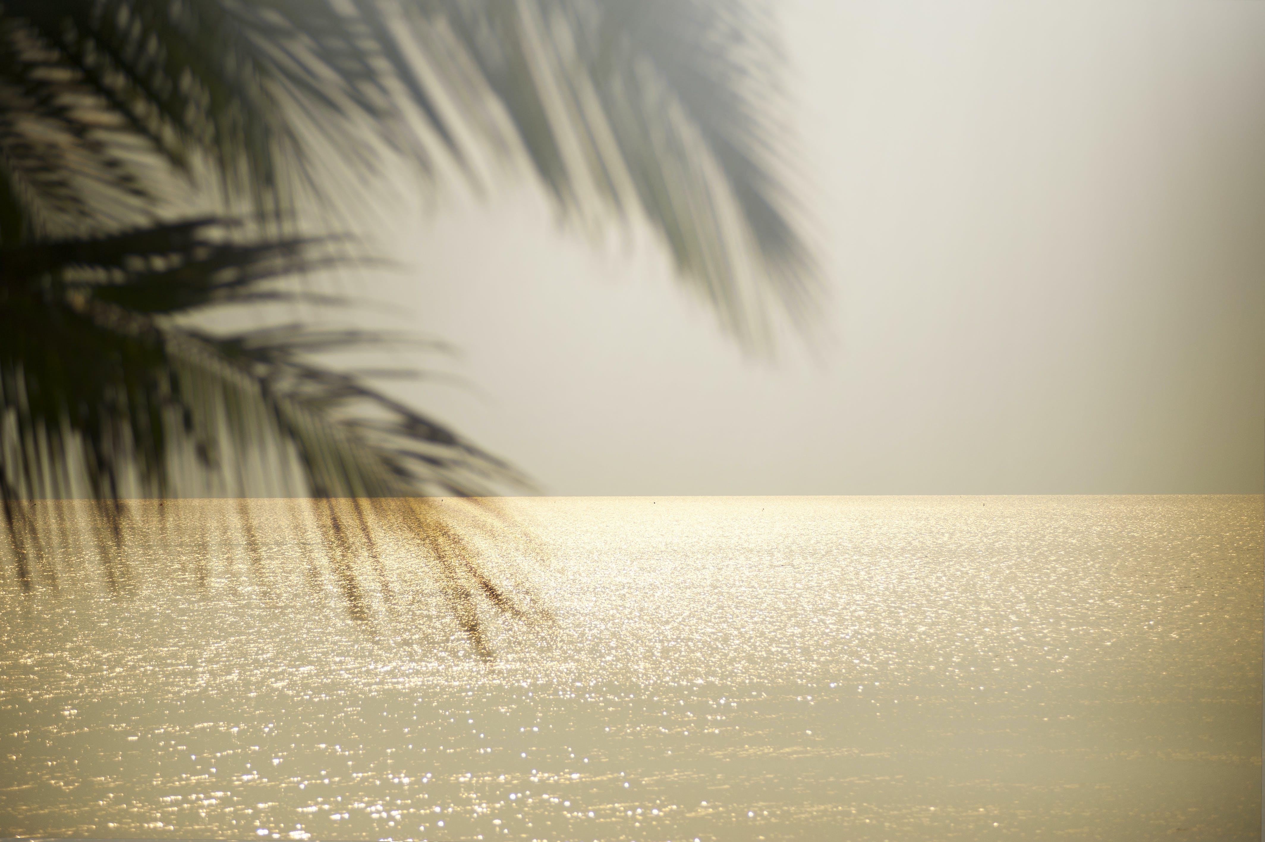Kostnadsfri bild av hav, himmel, horisont, Palmblad