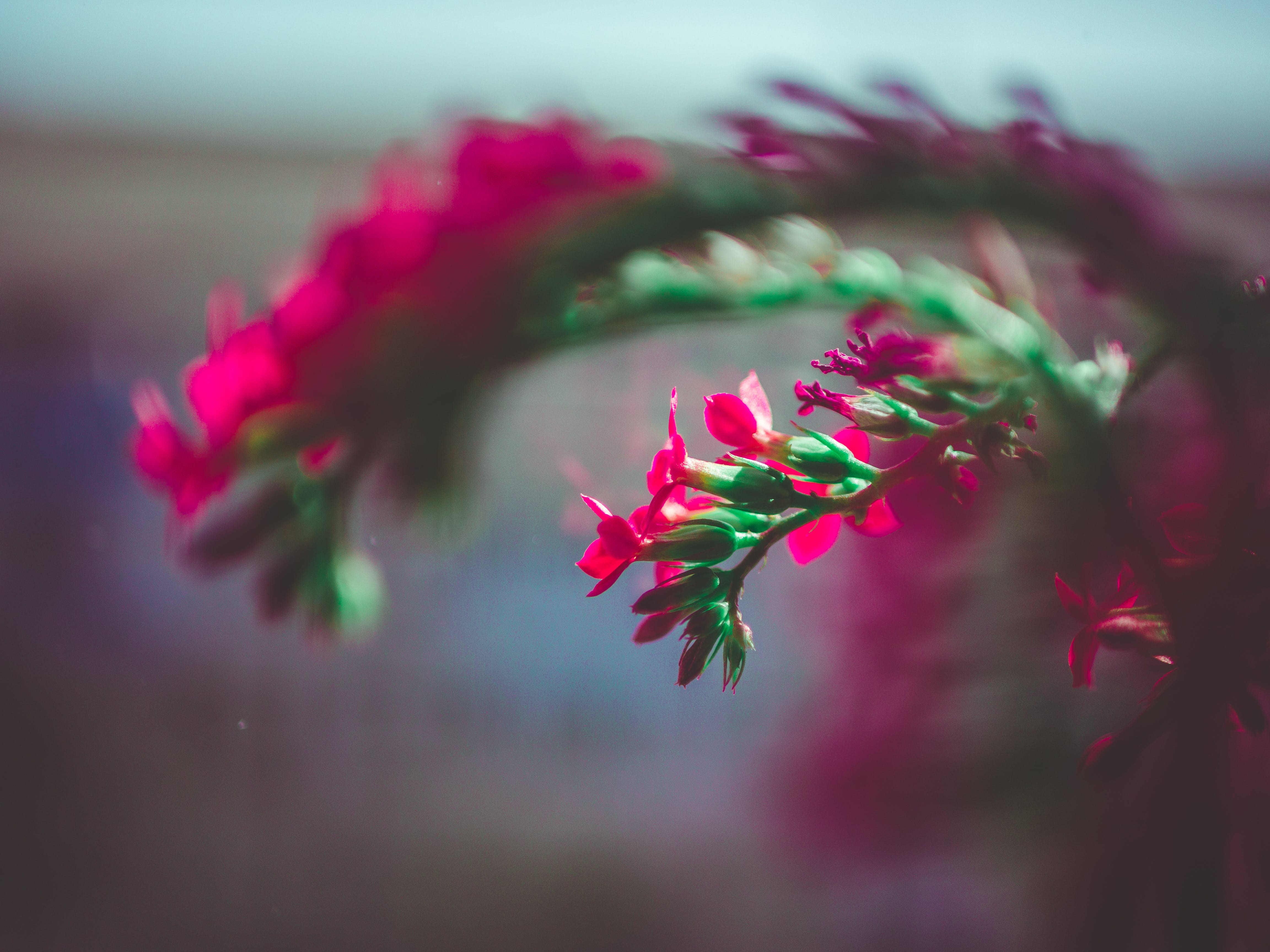 Selective Focus Photography Of Pink Flower