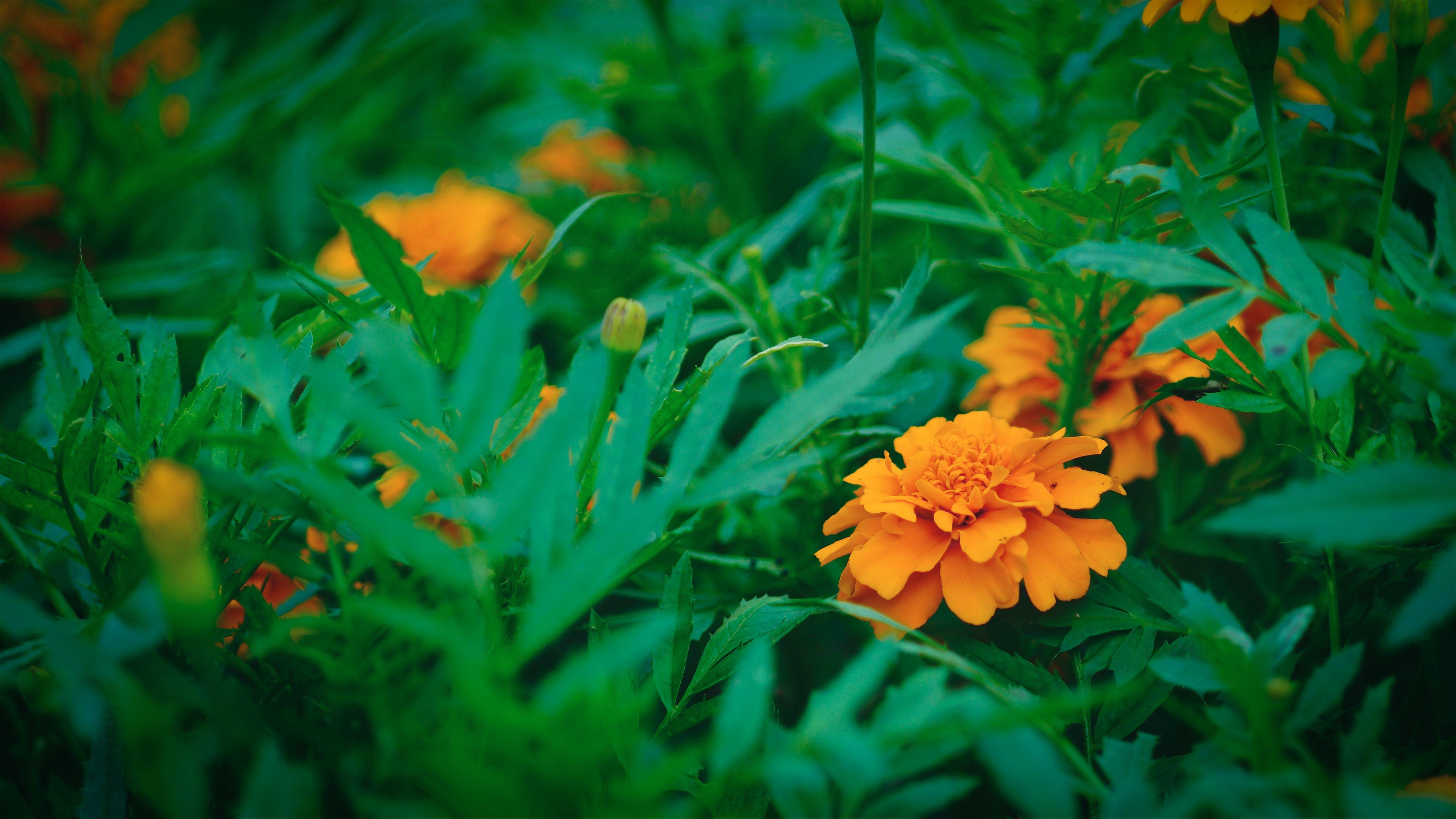 Free stock photo of nature, garden, park, flower