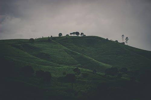 Ilmainen kuvapankkikuva tunnisteilla maisema, pilvinen, viljelymaa, vuori
