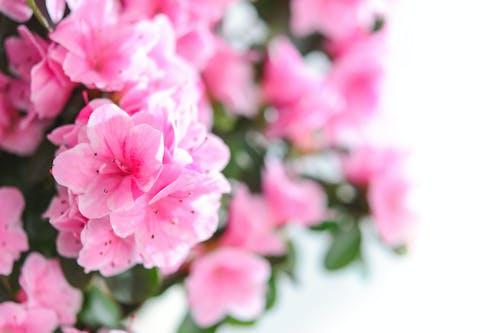 Základová fotografie zdarma na téma flóra, HD tapeta, kvést, květ