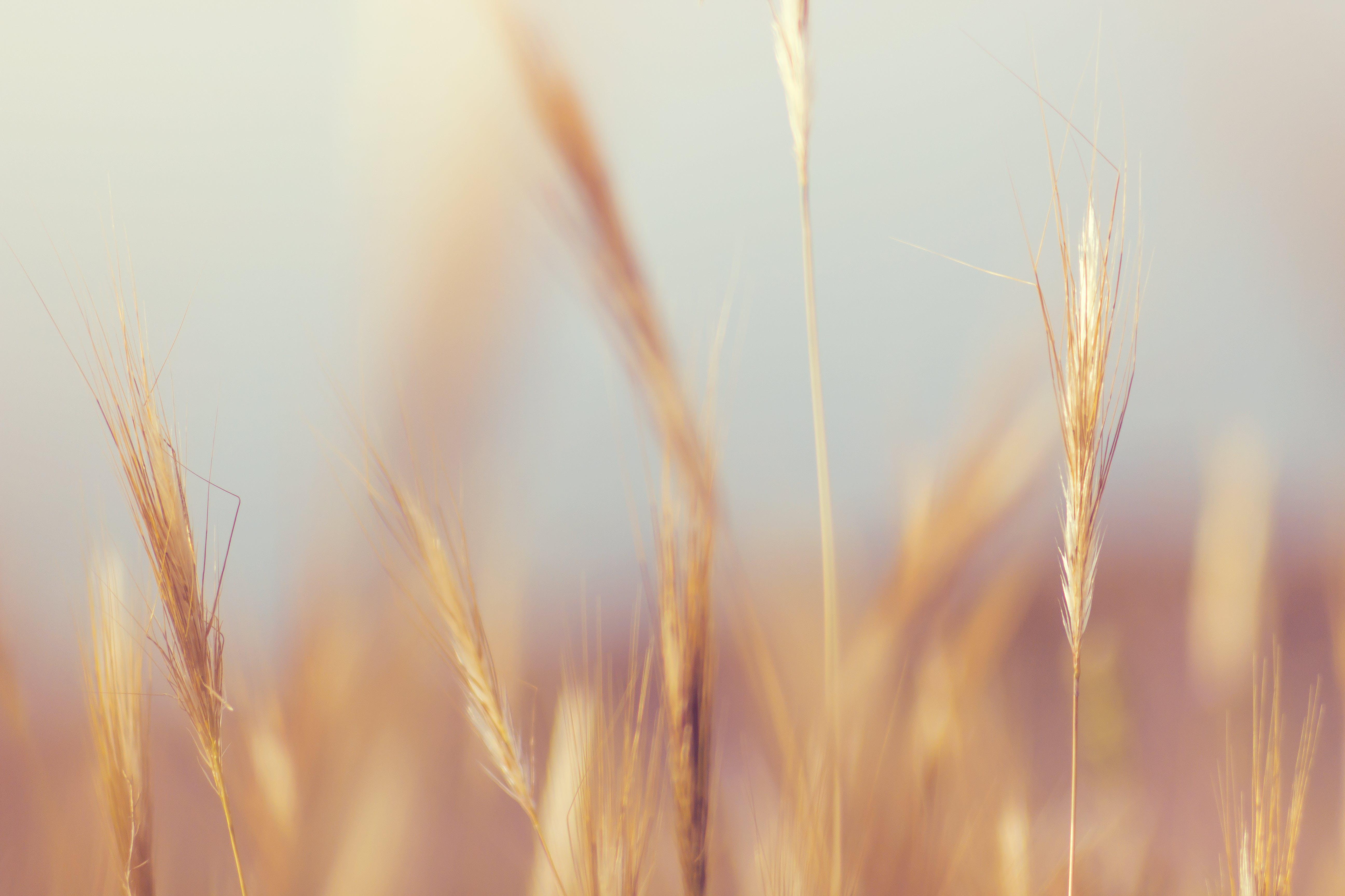 grass, macro, nature