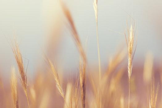 Free stock photo of nature, grass, plant, macro