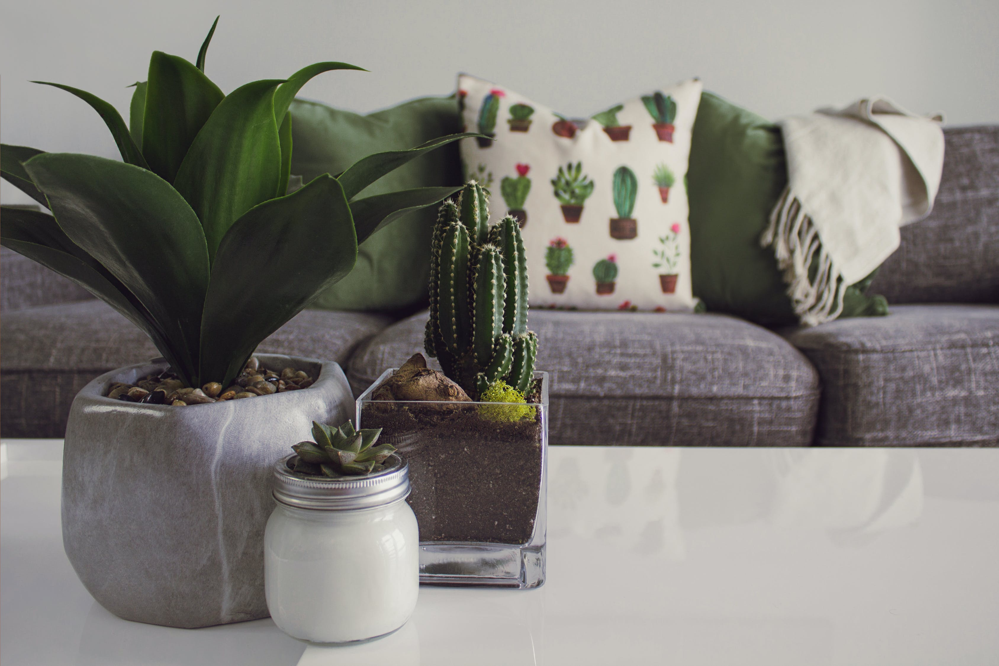 indoor plants on the table