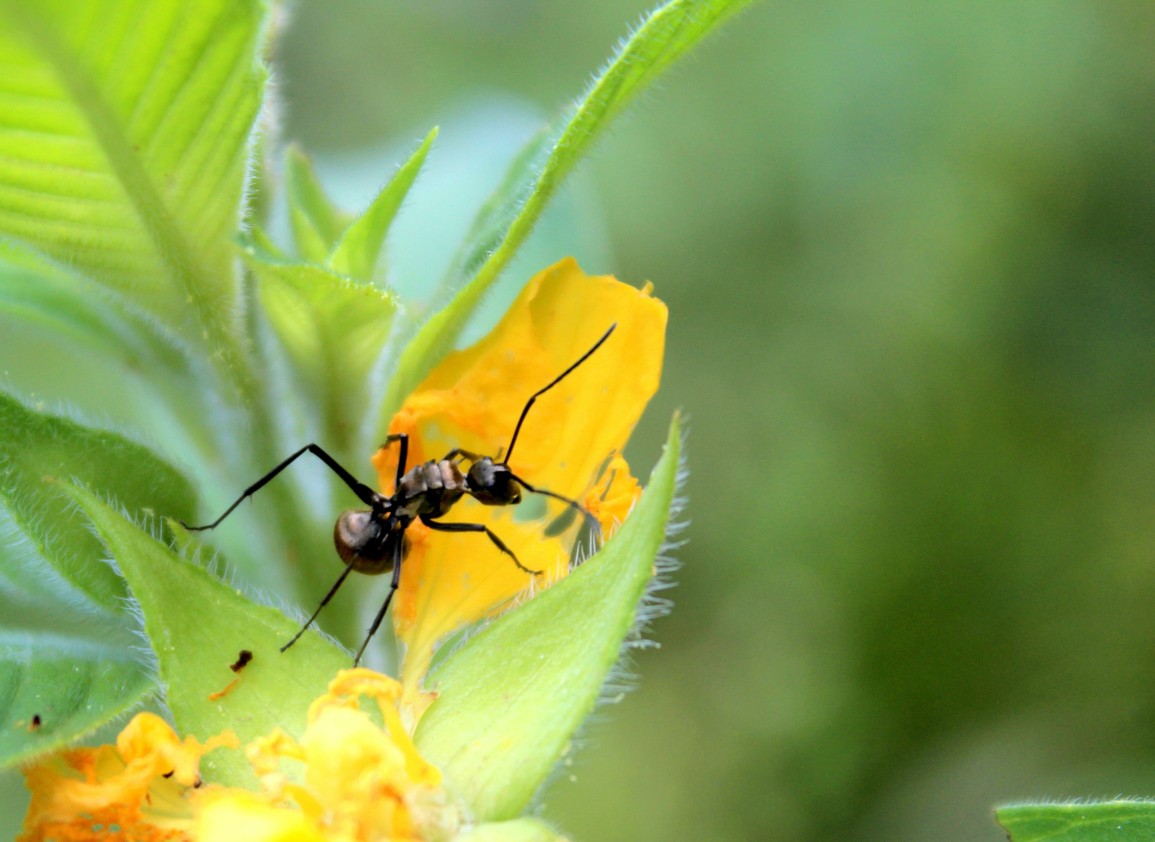Free stock photo of #bug, #flower, #insect, #Macro