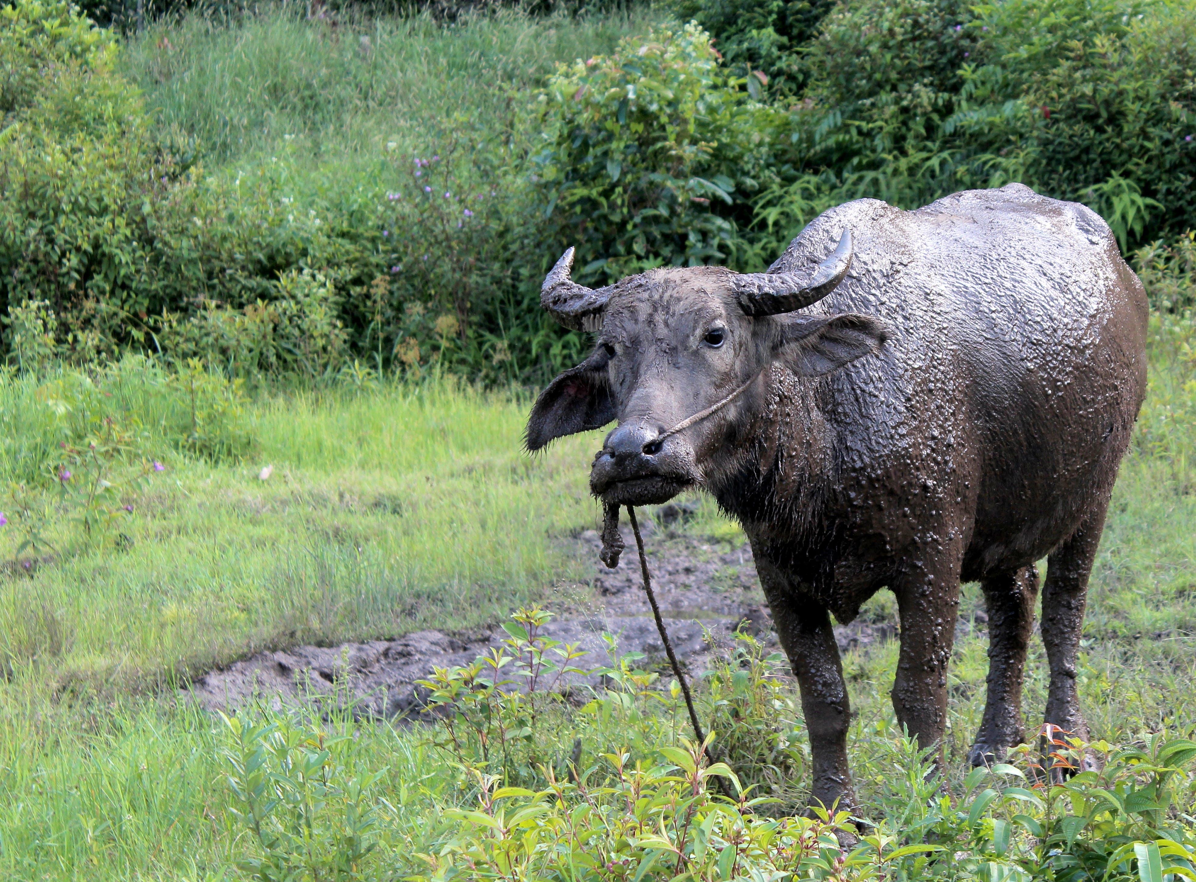 Free stock photo of #adventure, #landscape, #mud, #muddy