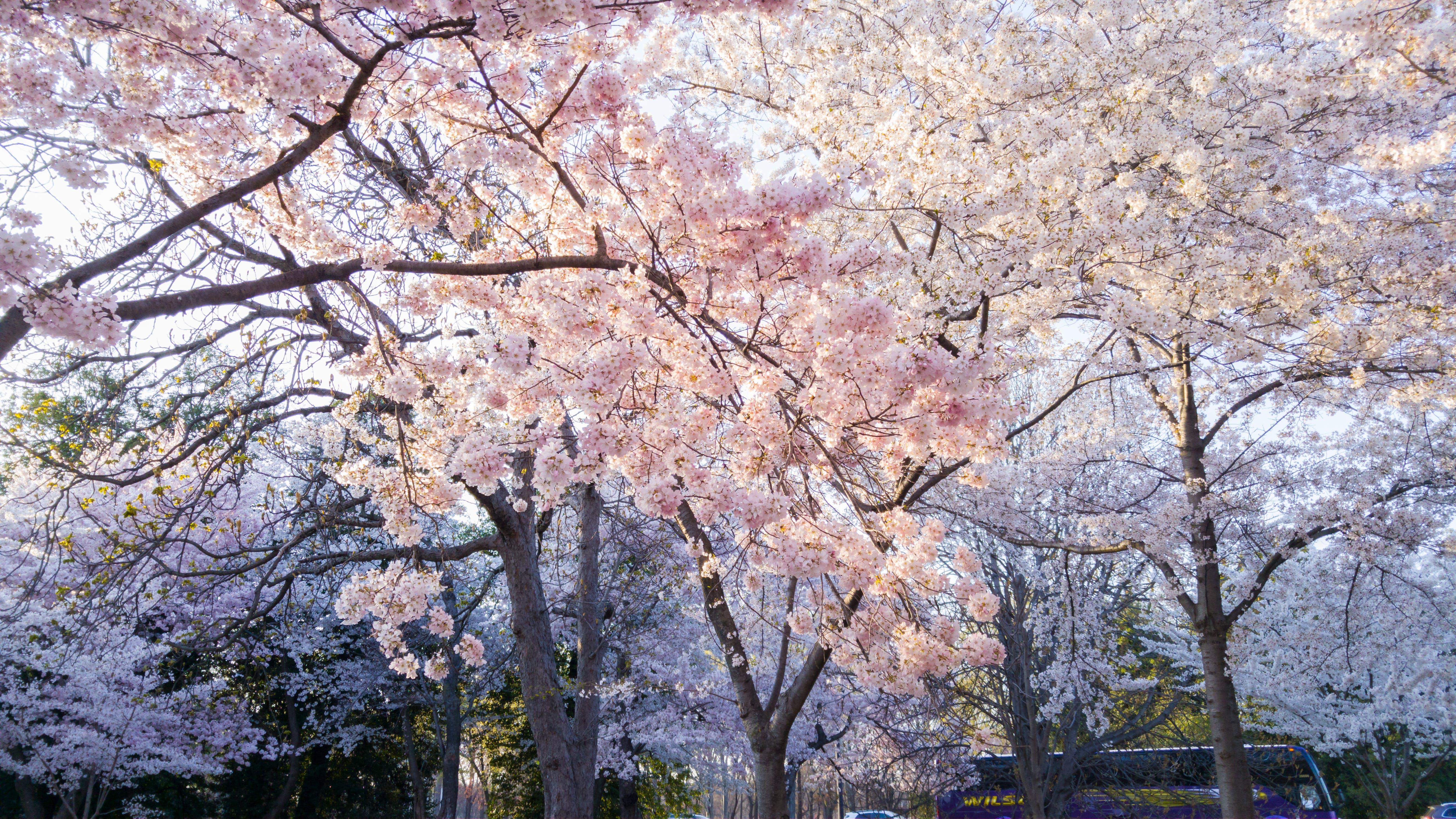 Kostenloses Stock Foto zu äste, bäume, blühen, blumen