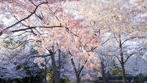 ağaçlar, bitki örtüsü, çevre, Çiçek açmak içeren Ücretsiz stok fotoğraf