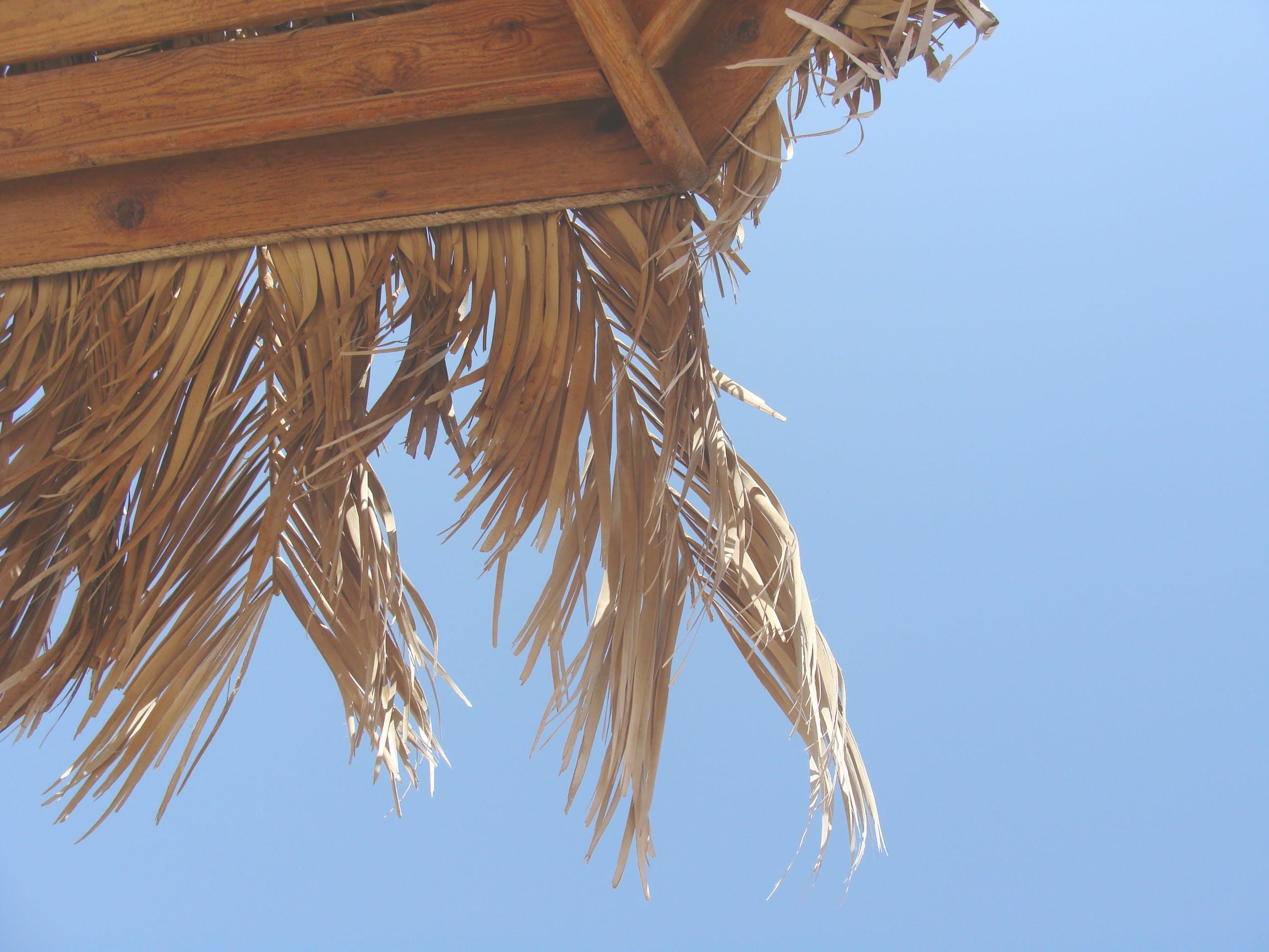 Kostenloses Stock Foto zu himmel, meer, palme, regenschirm