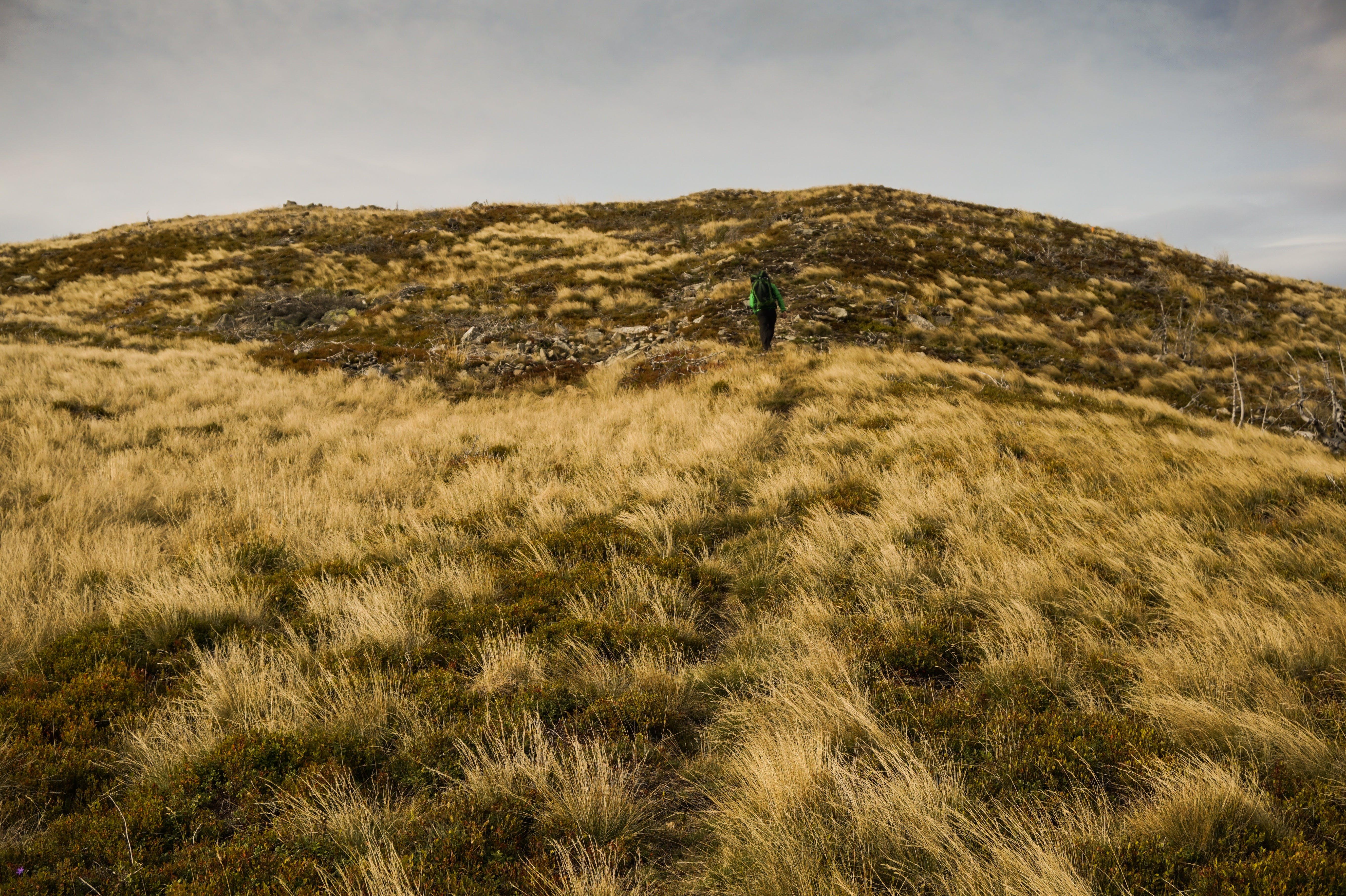 ハイキング, フィールド, 丘, 人の無料の写真素材