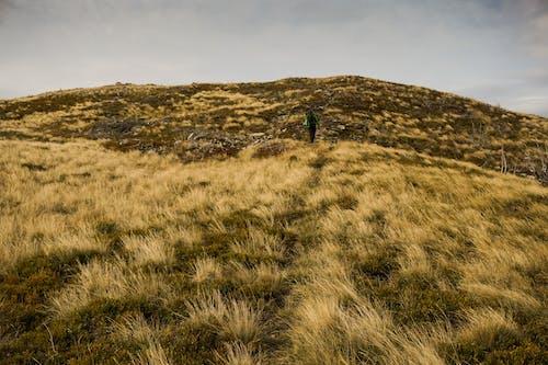 Gratis arkivbilde med åker, ås, fottur, gress