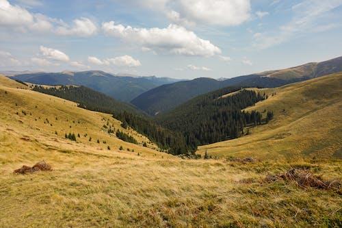 山岳, 岩, 日光, 木の無料の写真素材