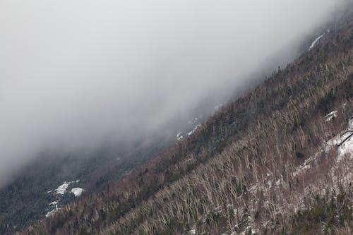 Fotos de stock gratuitas de arboles, bosque, cuesta, frío
