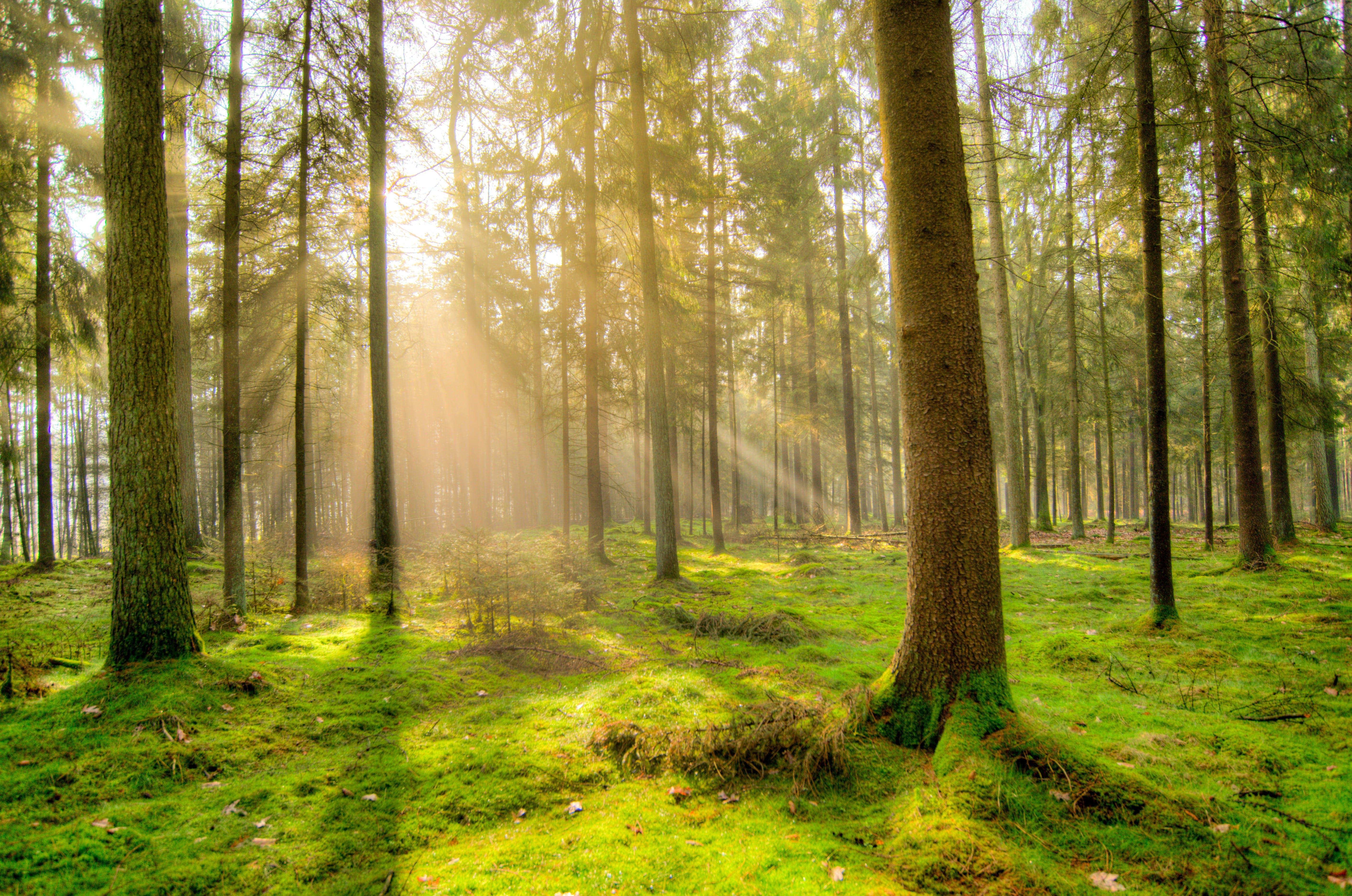 คลังภาพถ่ายฟรี ของ กลางวัน, ตะไคร่น้ำ, ต้นไม้, ทัศนียภาพ