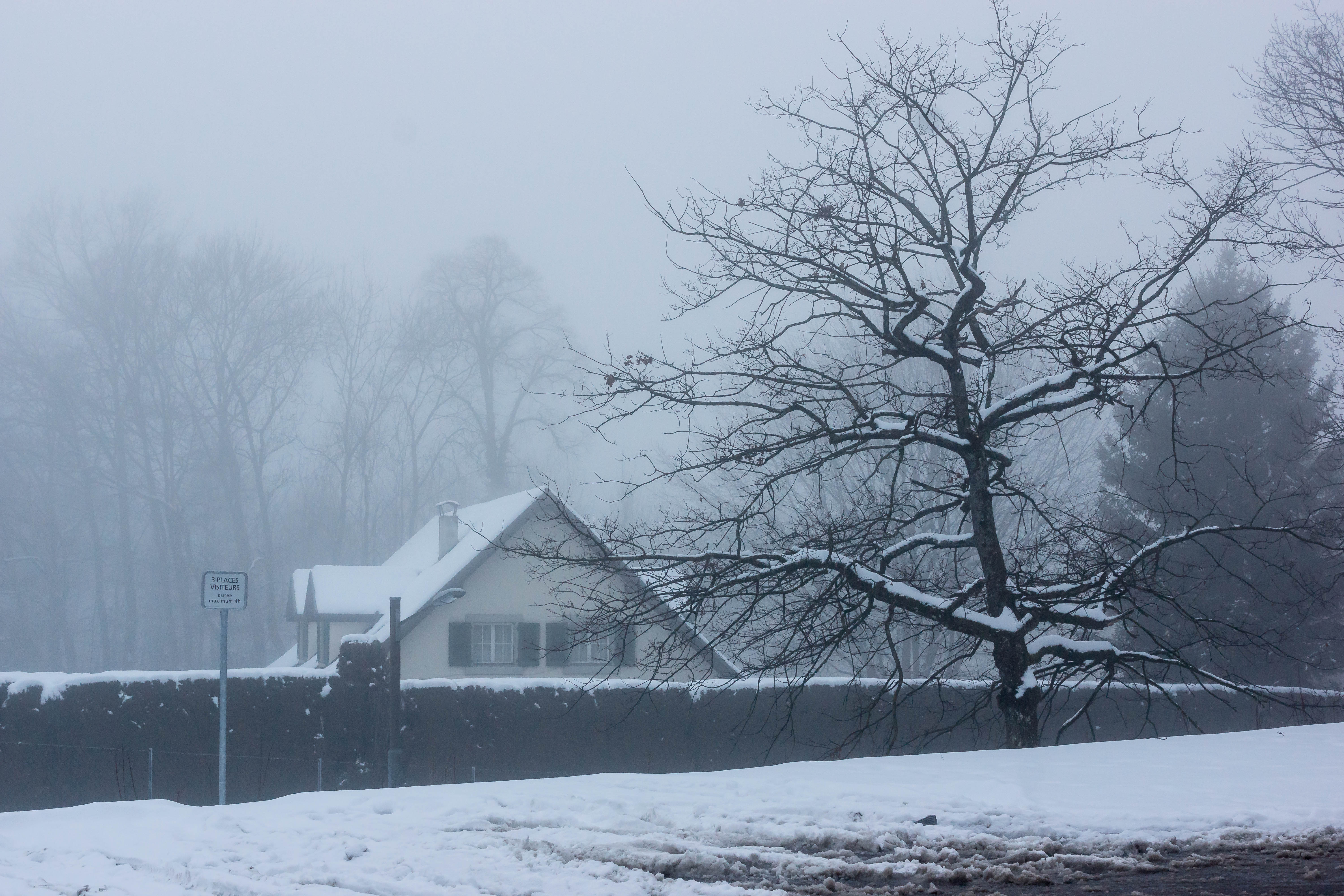 Photo of House Near Tree During Winter