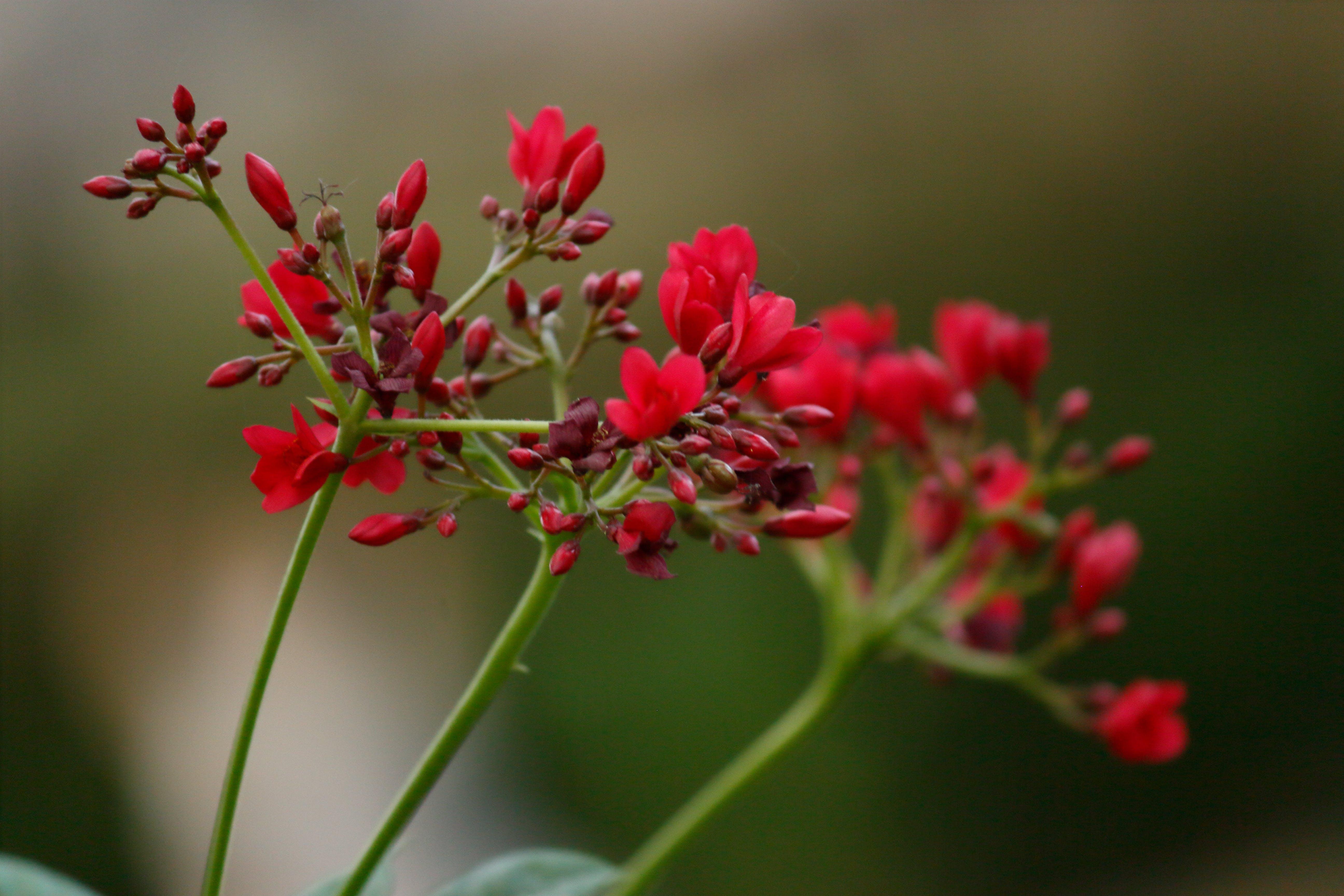 Free stock photo of #flowerphotography #flowersmakemehappy #flowerlove, #seasonalfloweralliance, flowersofinstagram