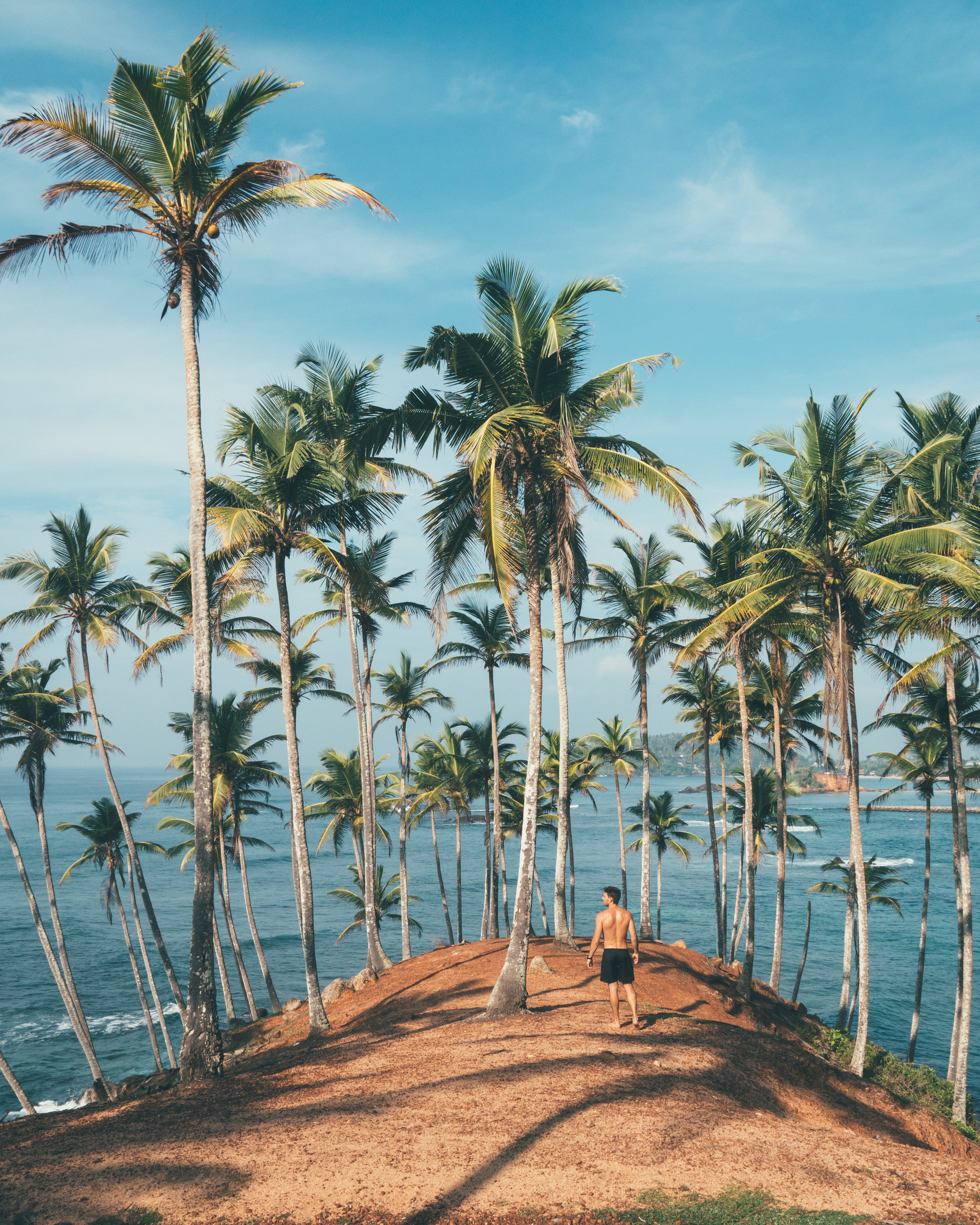 Person Standing on Dirt Surrounded by Coconut Trees