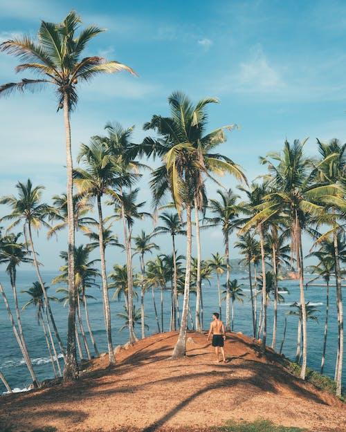 Immagine gratuita di acqua, alberi, alberi di cocco, avventura