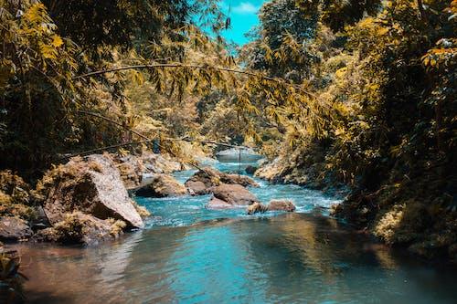 Foto d'estoc gratuïta de aigua, aigua neta, arbres, bonic